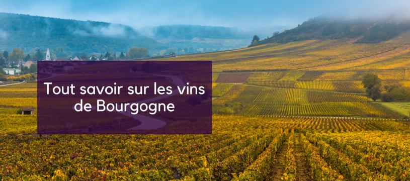 Tout savoir sur les vins de Bourgogne